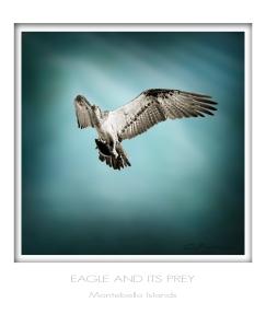 eagle & prey